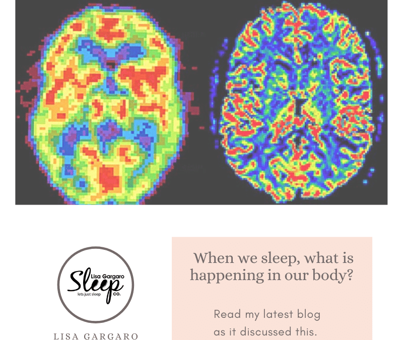 Lisa Gargaro Sleep Co – Blog – When we sleep, what is happening in our body?